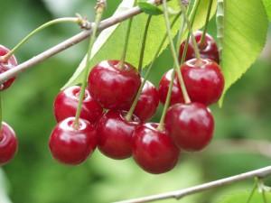 Cellulite: La recette aux queues de cerises
